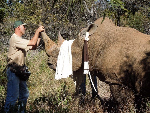 Askari lodge - rhino dehorning