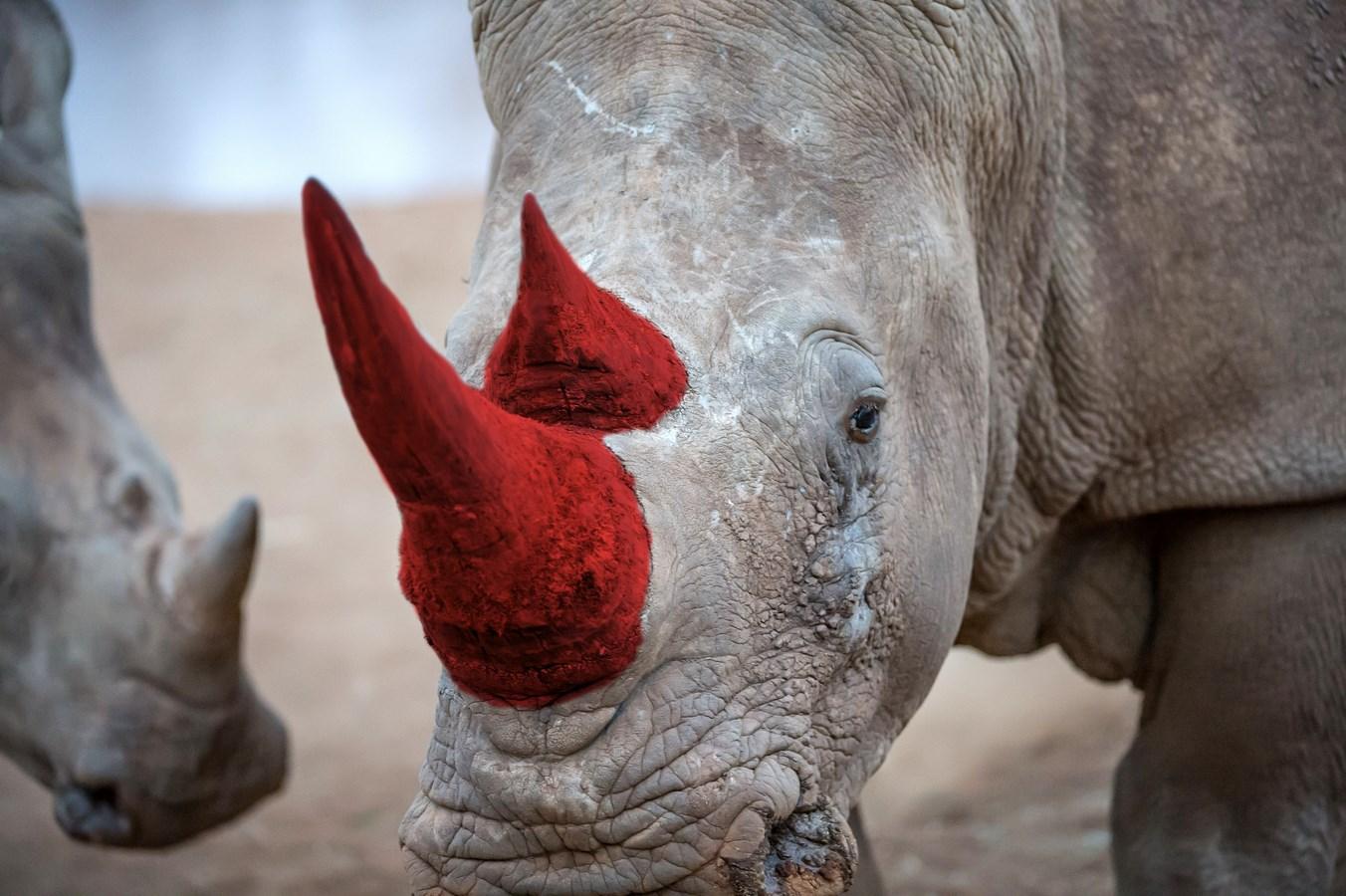White rhino dating