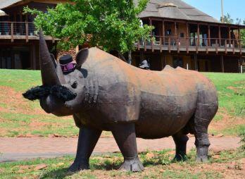 Askari Lodge Rhino Movember 1