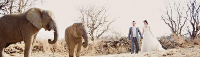 Askari Lodge Elephant wedding